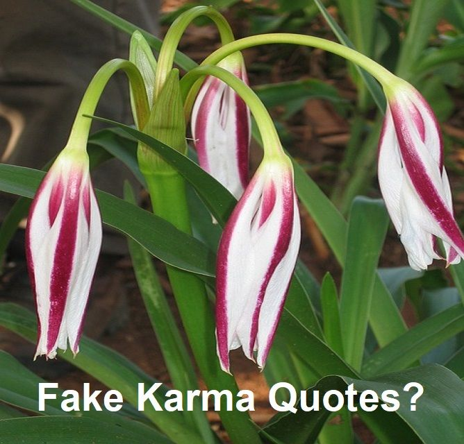 fake karma quotes